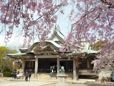 枝垂桜越しの拝殿