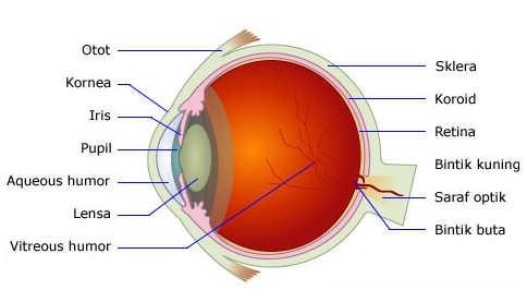 Bagian Bagian Mata Manusia dan Fungsinya