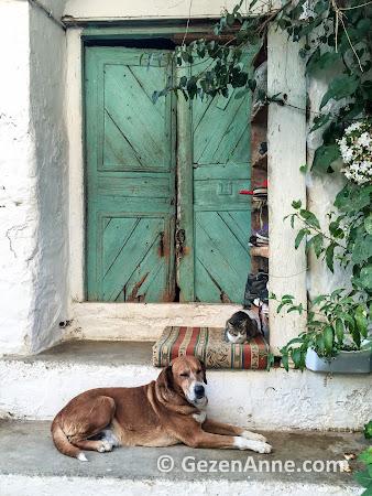 Şirince'de kapı önünde kedi köpek dostluğu