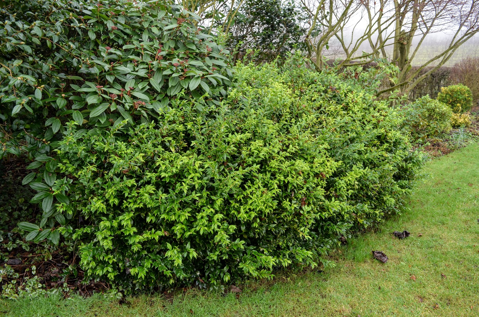 Pear Tree Cottage Garden January 2017