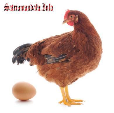 Usaha Sampingan Ibu Rumah Tangga Beternah Ayam Ras