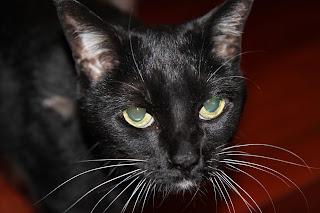 Clong: I have a new cat  It's a long story