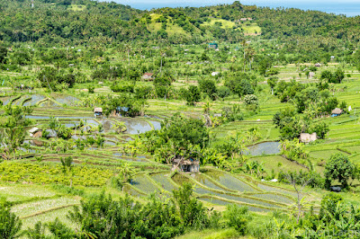 Rizières - Ricefields - Tirtangangga