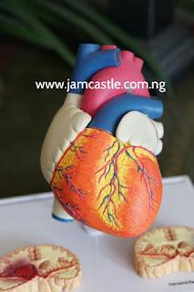 5 HASTY REASONS OF  HEART DISEASE