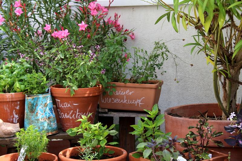 Basilikum, Erdbeerminze, Thaibasilikum, Kleiner Wiesenknopf | Arthurs Tochter Kocht by Astrid Paul