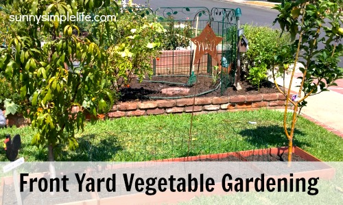 Sunny Simple Life Front Yard Vegetable Garden Update