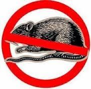 Cara Ampuh Mengusir/Membasmi Tikus di Rumah atau Sawah