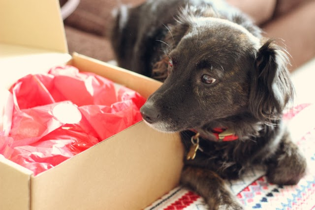 canine-Christmas-gift-box