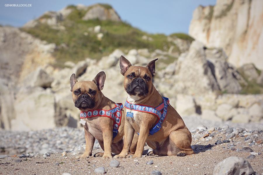 Hundeblog Genki Bulldog Senneville-sur-Fécamp Normandieurlaub