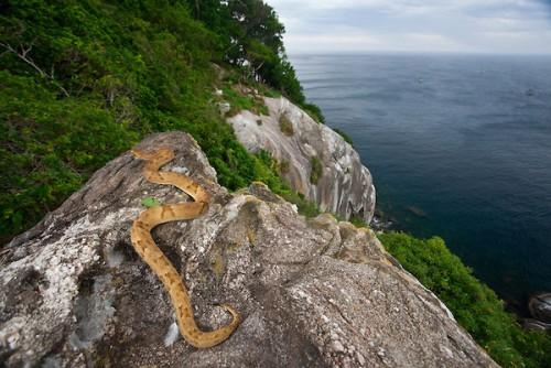 جزيرة الثعبان _Snake Island_هي جزيرة تقع قبالة سواحل البرازيل 6978-1-or-1407322199