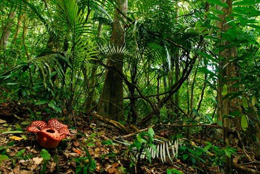 Taman Nasional Royal Belum