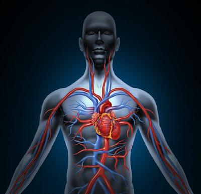 الوِقاية من أمراضِ القلب