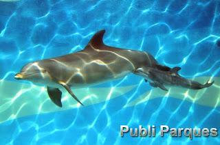 mamá y bebé delfín en Mundomar