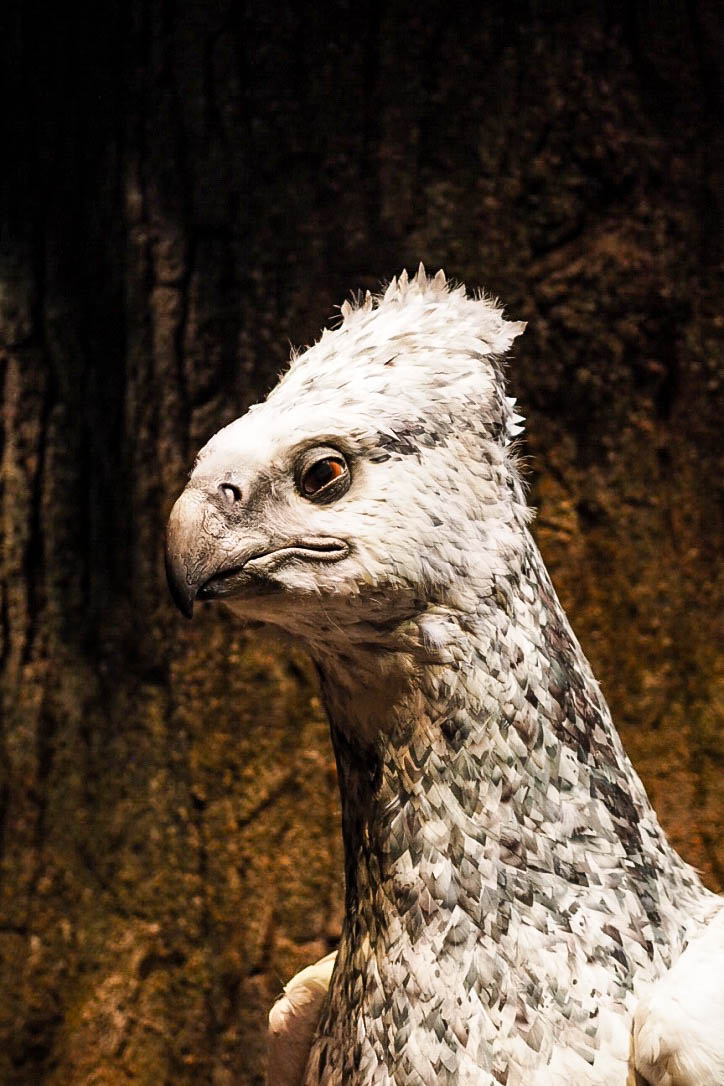 Buckbeak the hippogriff