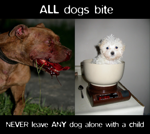 Funny Pitbull Attack Memes - Year of Clean Water