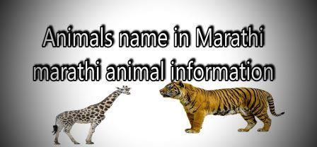 Animals name in marathi-marathi animal information