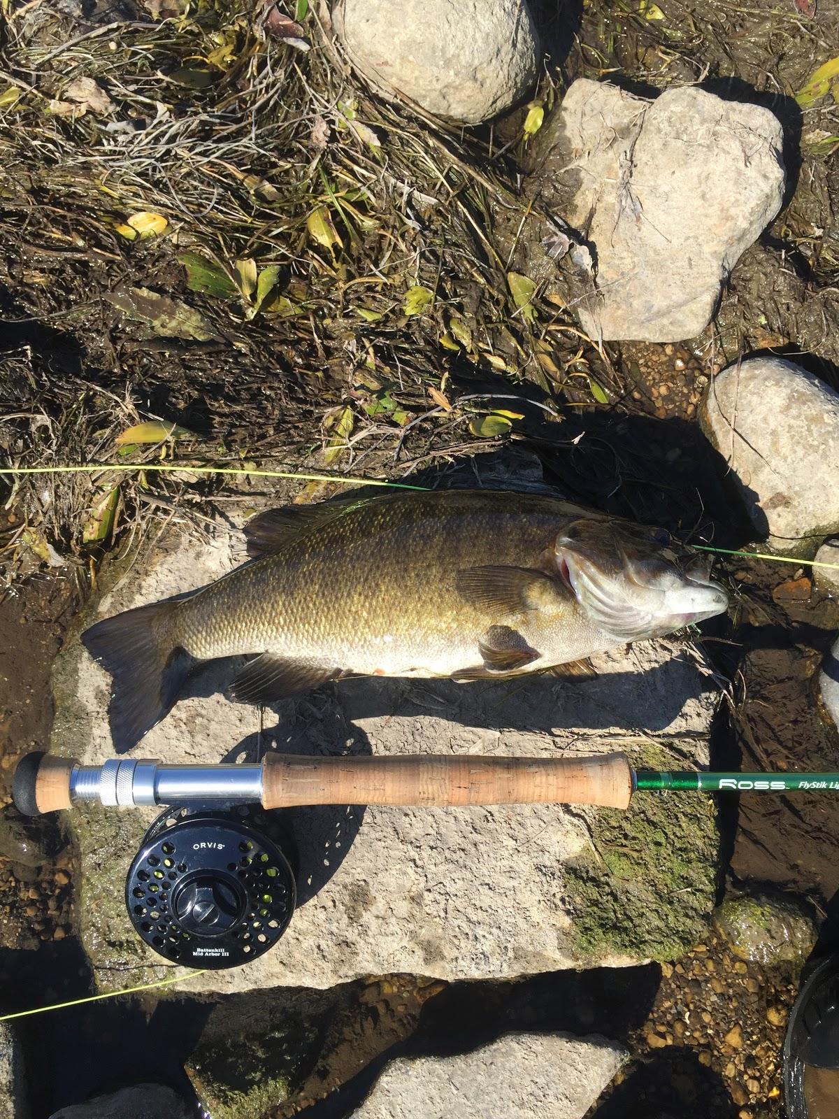 Northern illinois fly tyers milwaukee river smallies for Milwaukee river fishing