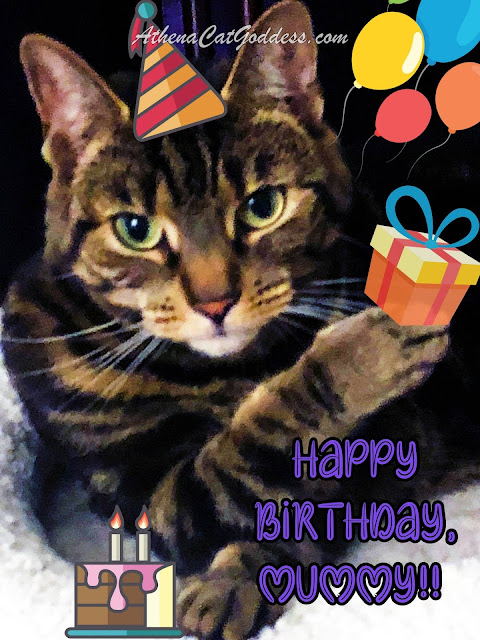 Happy Birthday cat birthday card