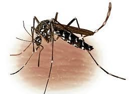 Mencegah-Virus-Zika-Dengan-Baliho-Berbau-Keringat