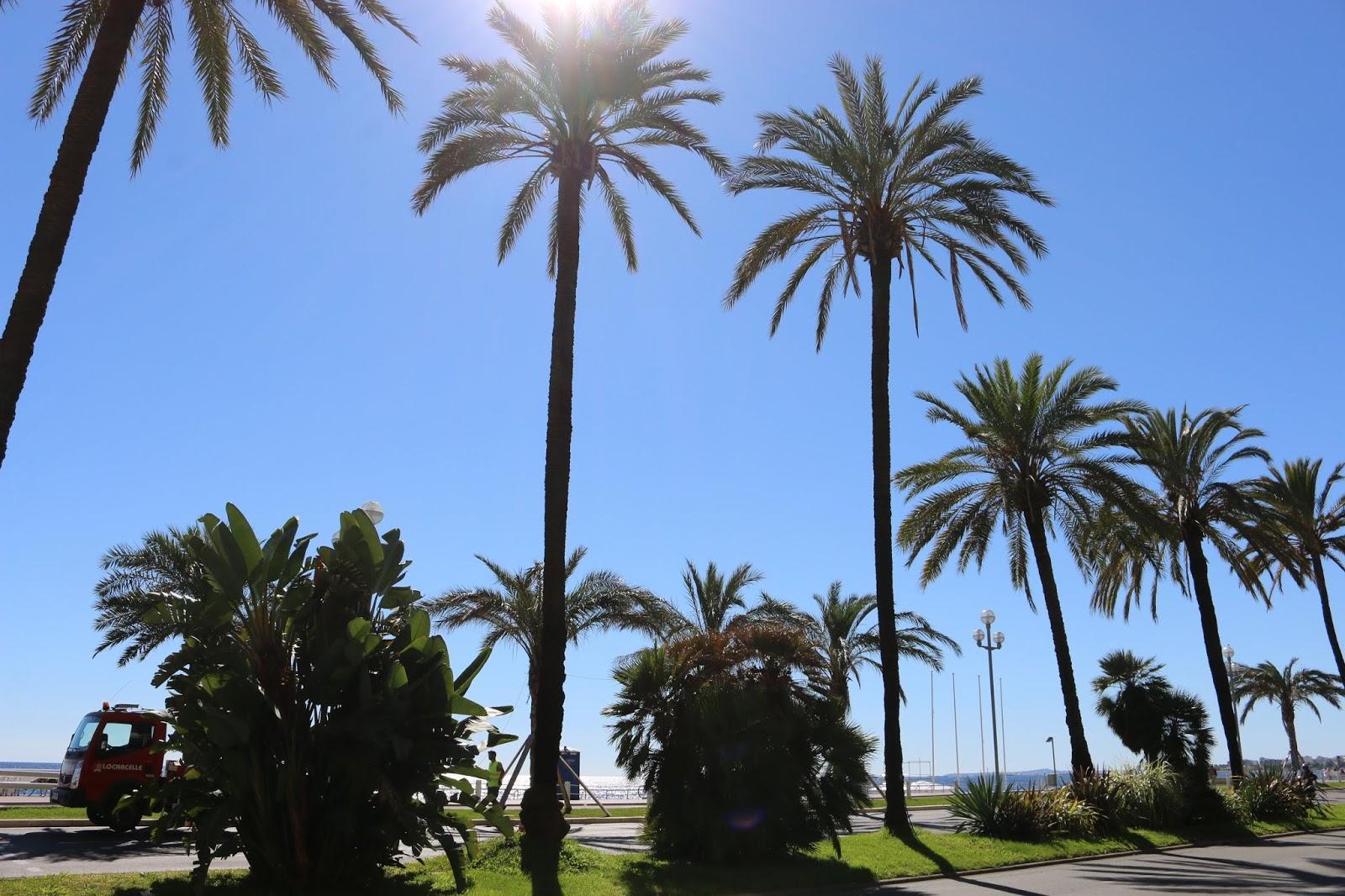 Nice Palm Trees