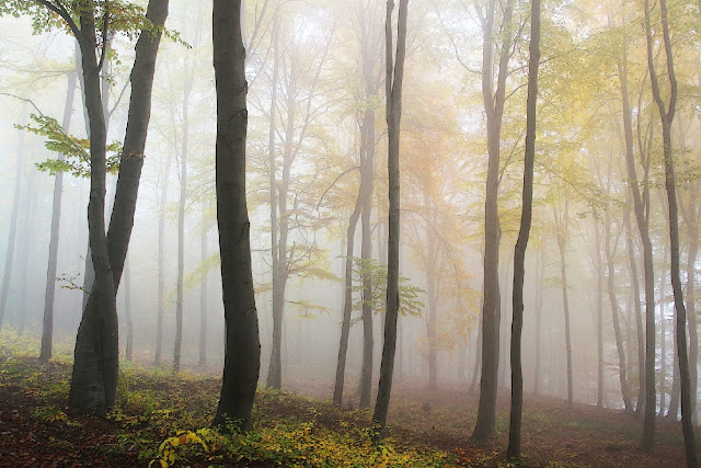 Forests fight global warming in ways more important than previously understood