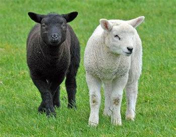 Animal Photo, Wild Animal Photo, Nice Animal Pic, Pet Animal Photo, Animal Pic, Animal Gallery, Beautiful Wild Animal.