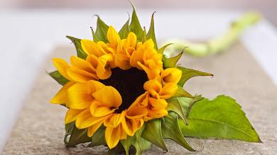 HOT Sunflower
