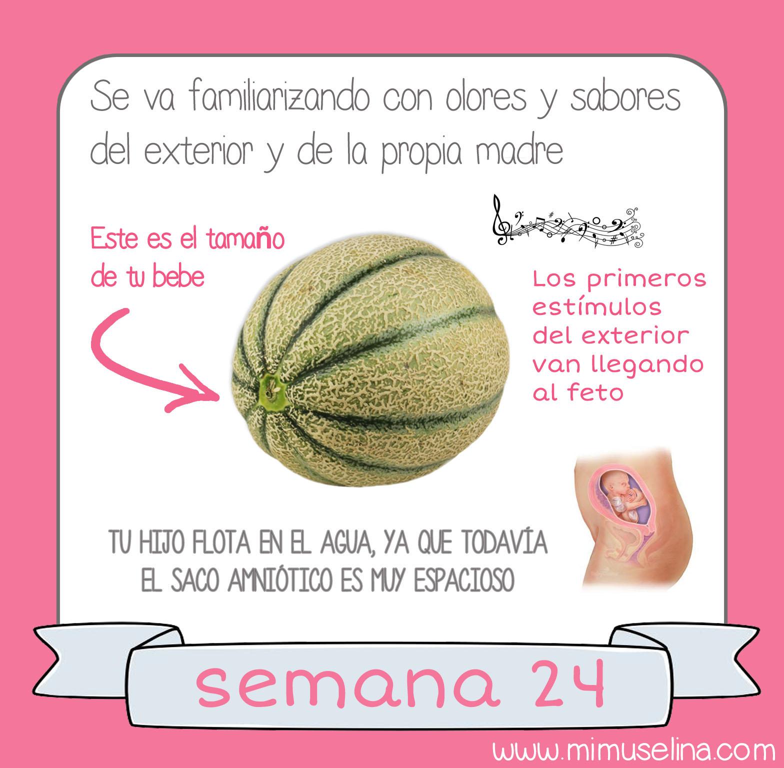 d9b4f3734 BebeBlog by mimuselina  Semana 24 embarazo. Tamaño y evolución del ...