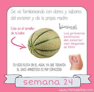 Semana 24 embarazo. Tamaño y evolución del bebé @mimuselina