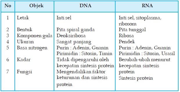 Biologi gonzaga perbedaan adn dan arn ccuart Images