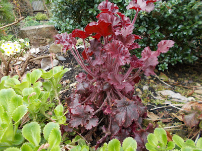 Heuchera 10 shade loving plants Green Fingered Blog