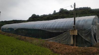 ブドウ園のテン対策とみかん畑のヒヨドリ対策