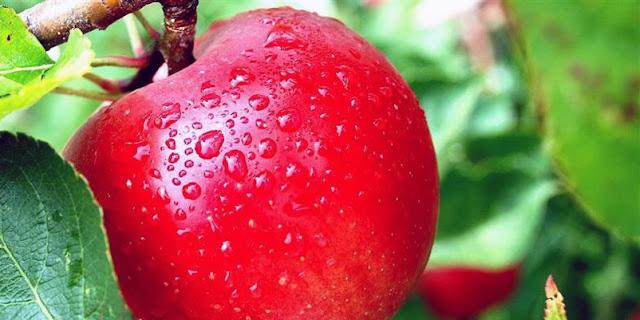 jus untuk diet cepat, jus diet langsing, jus diet untuk malam hari, jus diet aurel, jus untuk mengecilkan perut, jus diet pagi hari, jus sayur untuk diet, jus sayuran untuk diet, manfaat jus apel campur wortel, manfaat jus pir, manfaat jus apel hijau, manfaat jus apel merah, manfaat jus apel untuk diet, manfaat jus apel hijau campur tomat, manfaat jus apel untuk kecantikan, manfaat jus apel hijau untuk diet, Jus aple untuk menurunkan berat badan,