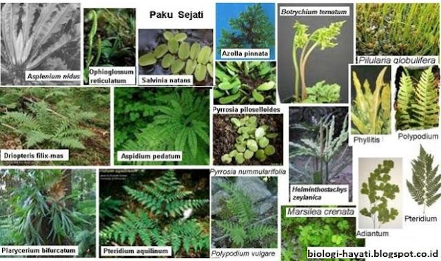 Daftar Lengkap Nama Latin ( ilmiah ) Tumbuhan dari A-Z