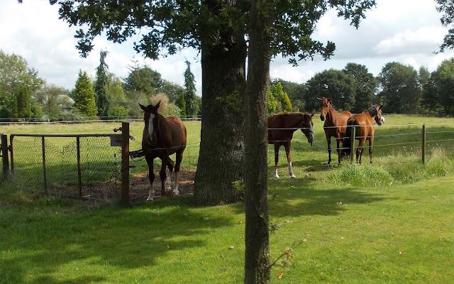 Foto met bruine paarden in het weiland