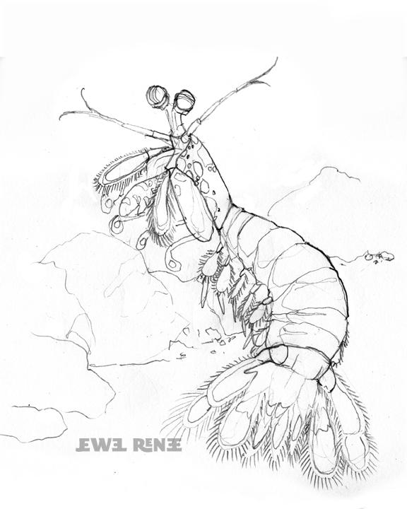 shrimp coloring page