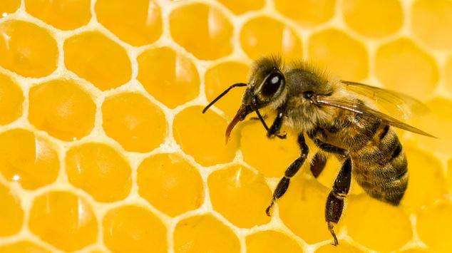 Simbolo y significado de las abejas