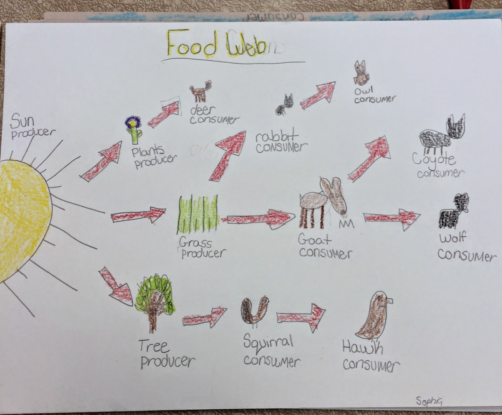 Fab And Fun In 3rd Ecosystems And Food Chains