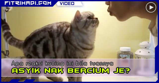 VIDEO Bila Kucing Jemu Tuannya Asyik Nak Bercium