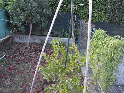 Scheletro per copertura piante