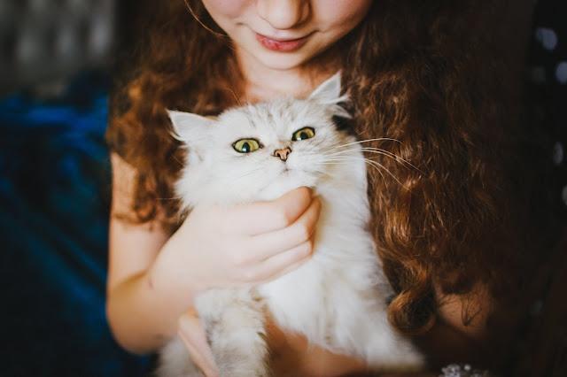 5 dicas básicas para cuidar do seu gato