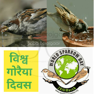 विश्व गोरैया दिवस -  World Sparrow Day (20 March)