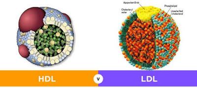cara meramu daun kelor, cara pengolahan daun kelor untuk kolesterol, cara mengolah daun kelor untuk menurunkan kolesterol, cara merebus daun kelor untuk kolesterol, cara meramu daun kelor untuk kolesterol, daun kelor asam urat, cara membuat jus kelor, bahaya daun kelor
