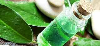 cara menghilangkan kelemumur cuka minyak pokok teh atau tea tree oil