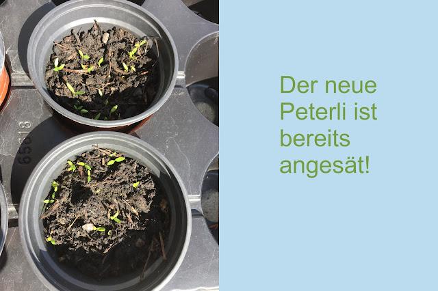 Peterli angepflanzt