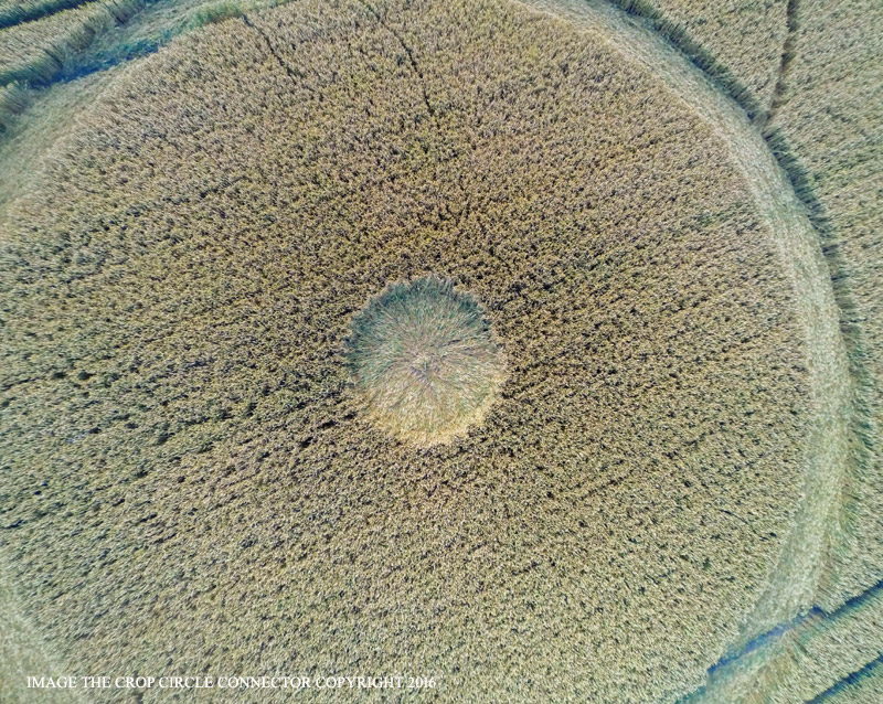 Crop circle en Wiltshire - 22 de julio (2016)