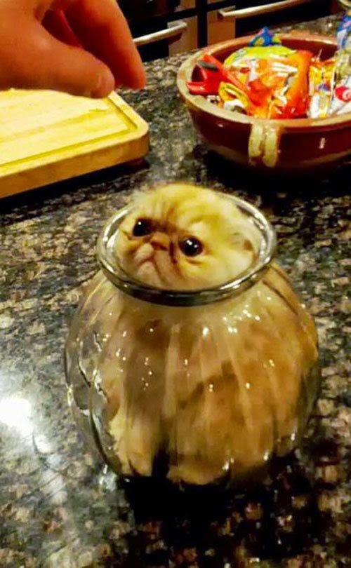 Funny Cat Stuck in Jar joke picture