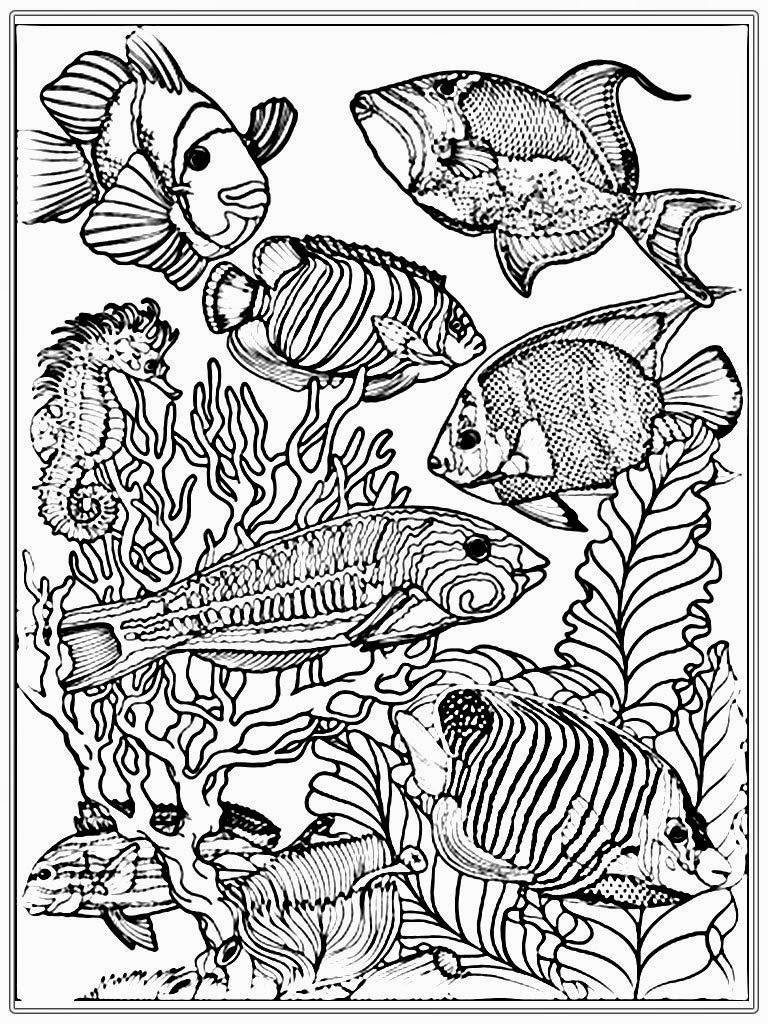 realistic sea life coloring pages simonschoolblogcom fish