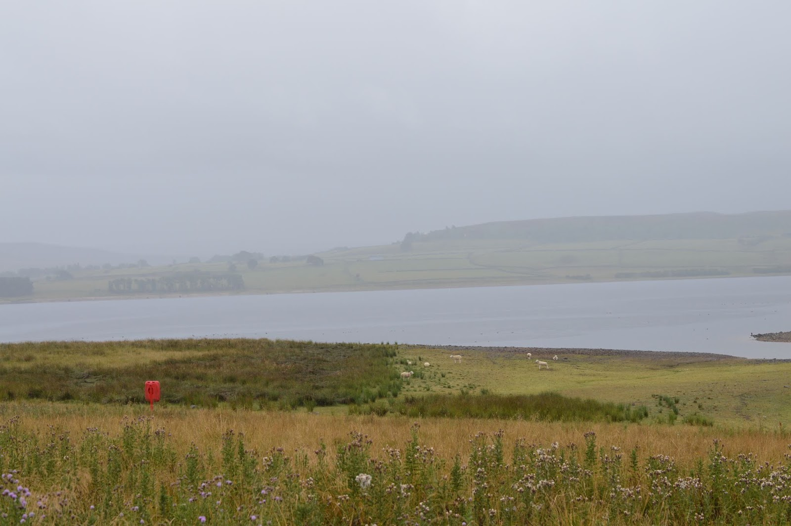 FREE Nature Trail at Derwent Waterside Park, Consett  - reservoir in the rain