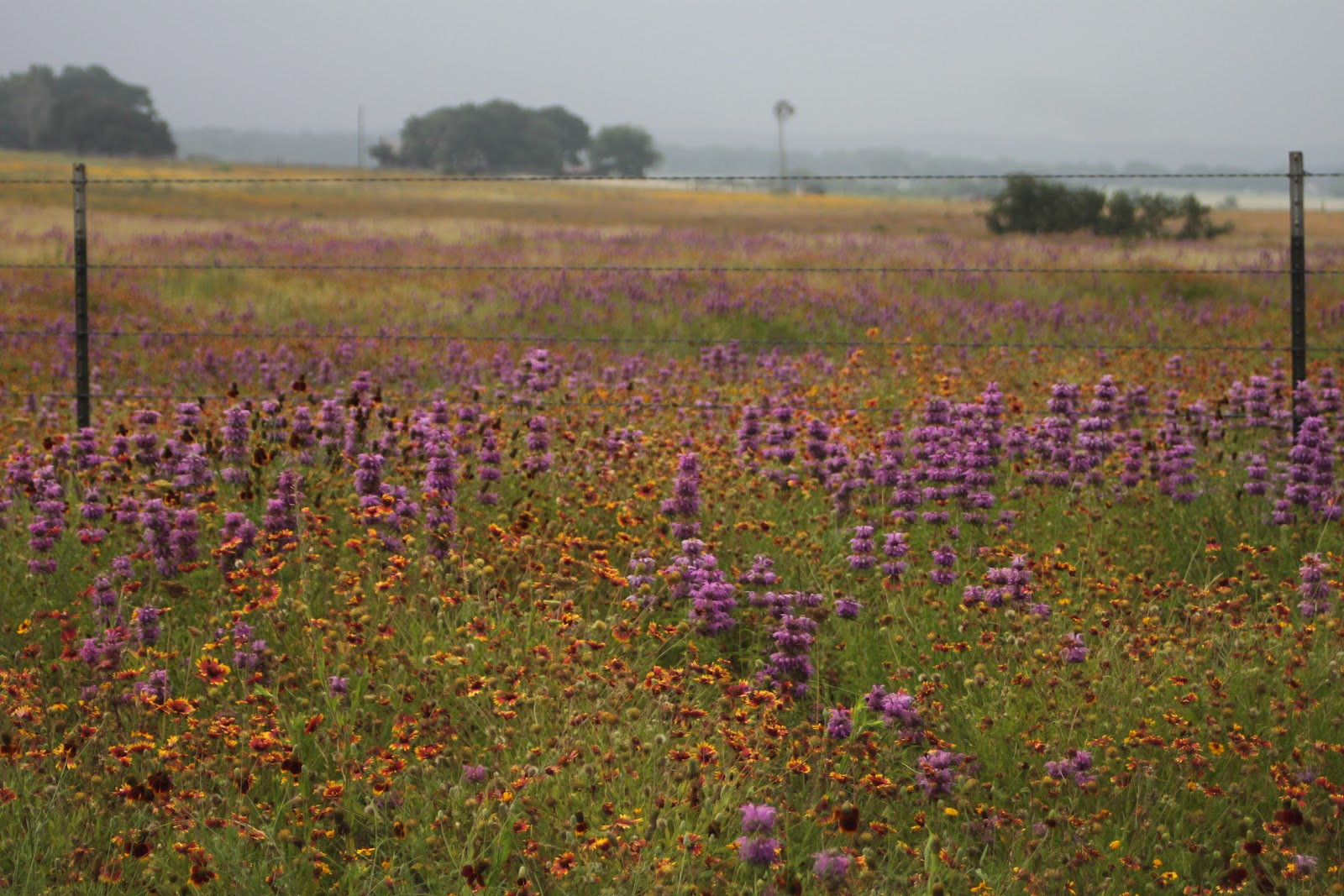 3 Days of Scenic Drives through Texas Wildflower Country